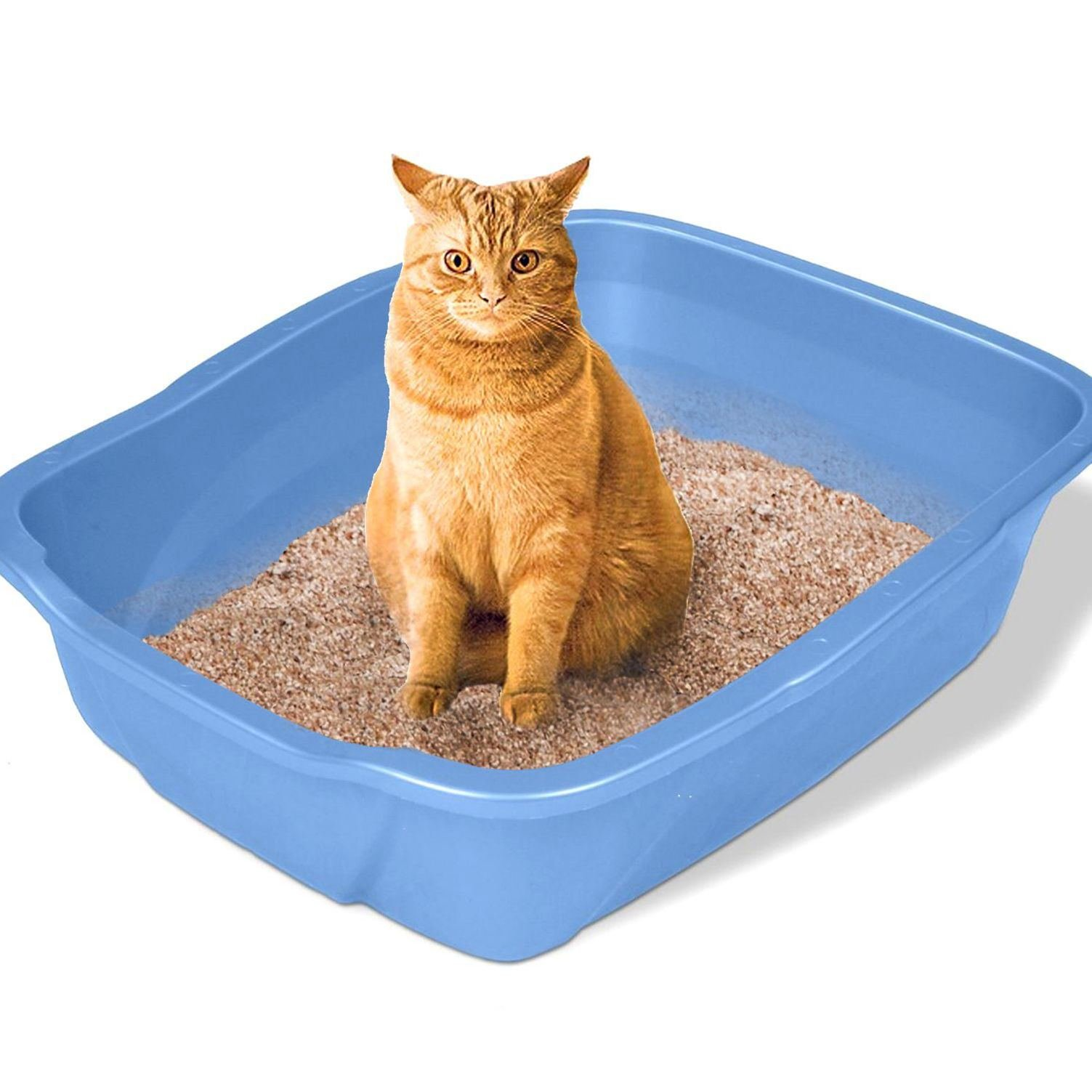 Large Cat Litter Box Big Kitty Pan Huge Pet Toilet Clean Mat House Furniture :New