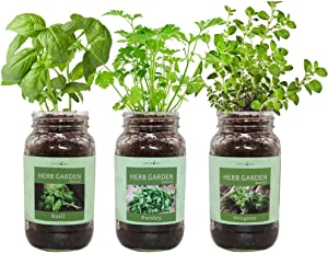 Environet Herb Gift Set, Mason Jar Herb Garden Starter Kit Indoor, Includes 3 Mason Jar, 9 Coco Coir Planting Wafers and 3 Kinds of Heirloom Seeds (Basil, Parsley, Oregano)