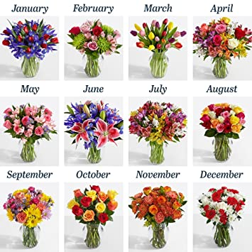 Amazon Proflowers 6 Count Multi Colored 6 Months Of Flowers