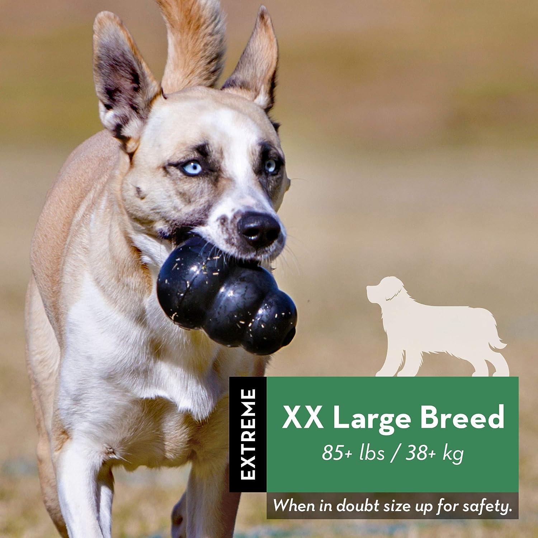 pelotas kong para perros