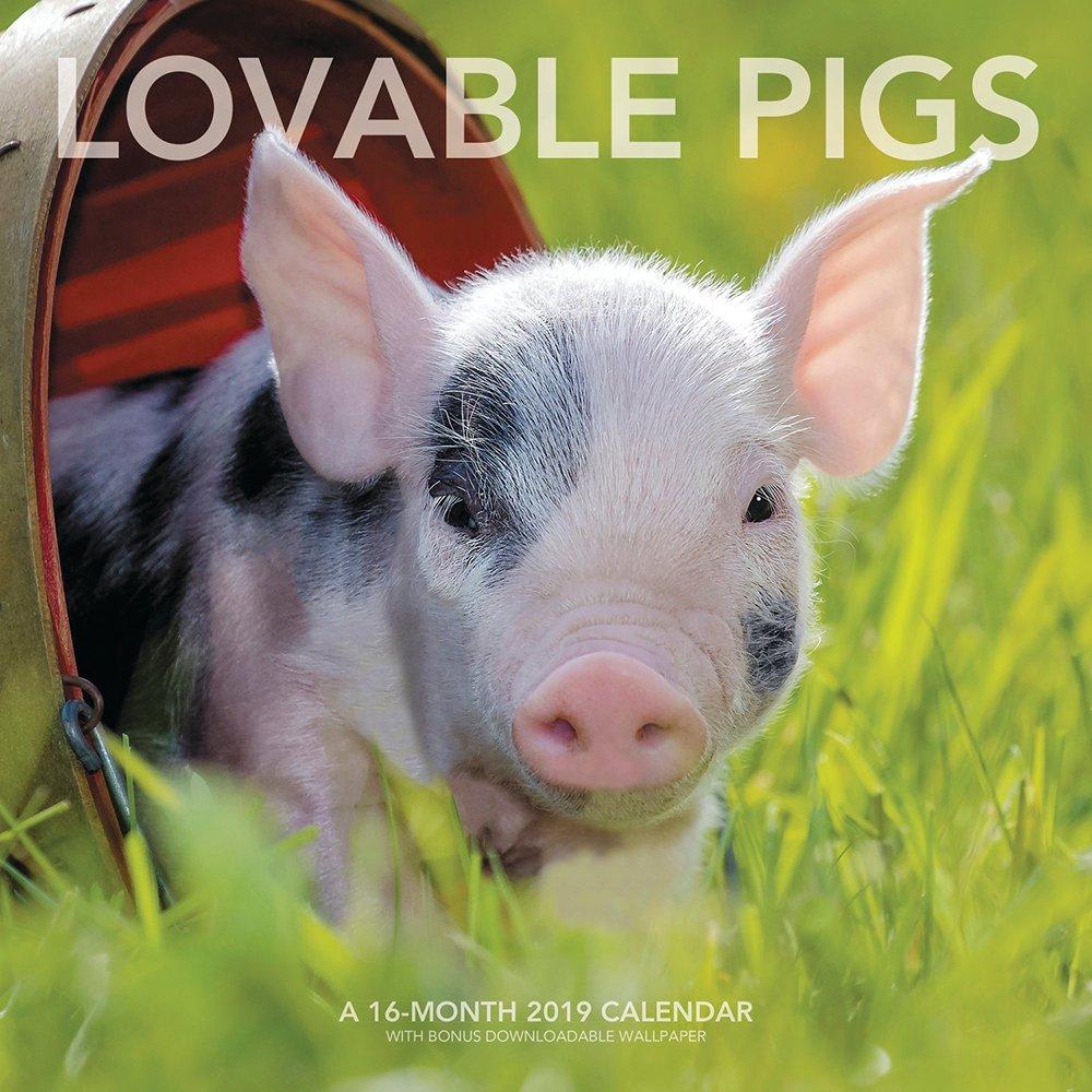 Lovable Pigs Wall Calendar (2019)