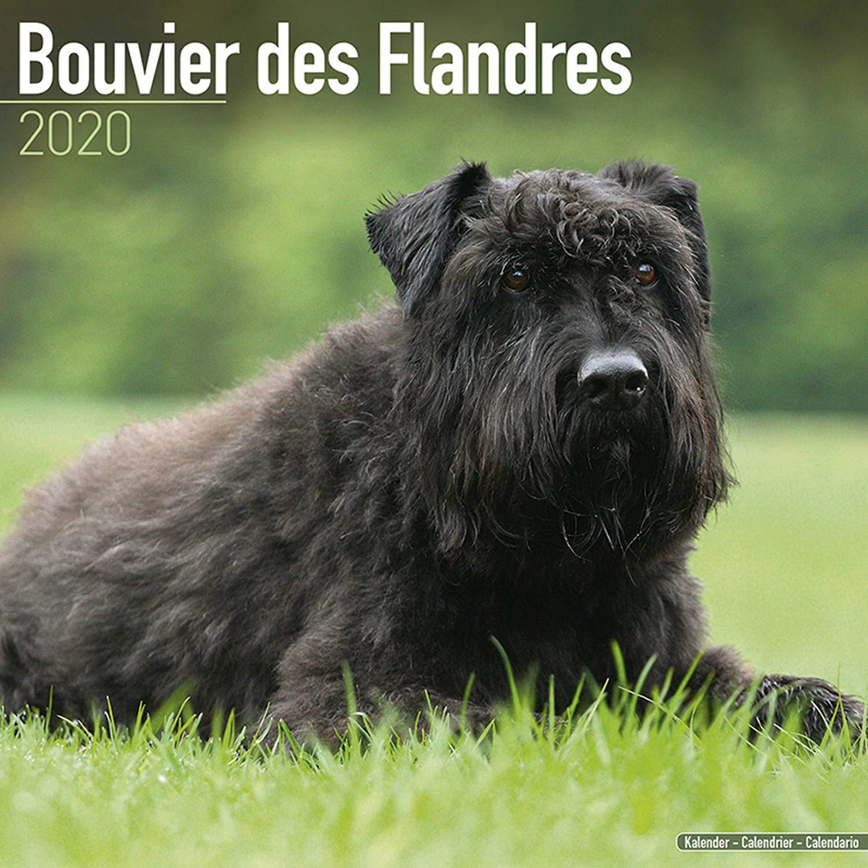 WALL CALENDER 2019 BOUVIER DES FLANDRES CALENDAR