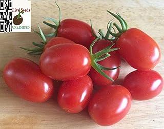 Portal Cool 20 semillas de cultivos de tomate más fino Uk 'Cherry Plum'