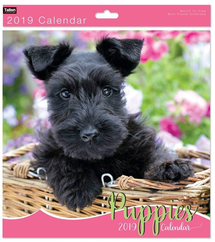 2019carrée mois par page Animal Photo murale calendriers–Rose vif chiots cardwarehouseuk