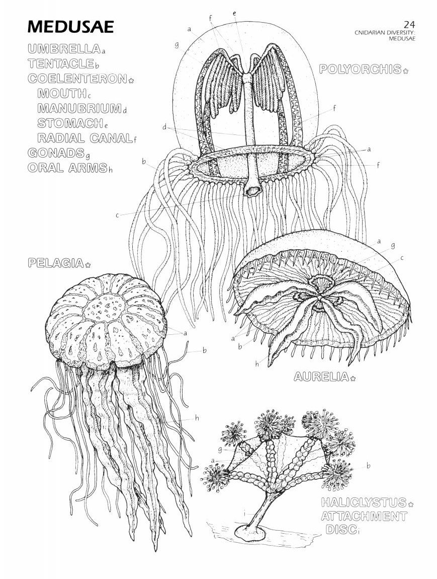 The Marine Biology Coloring Book, Second Edition: Thomas M. Niesen ...