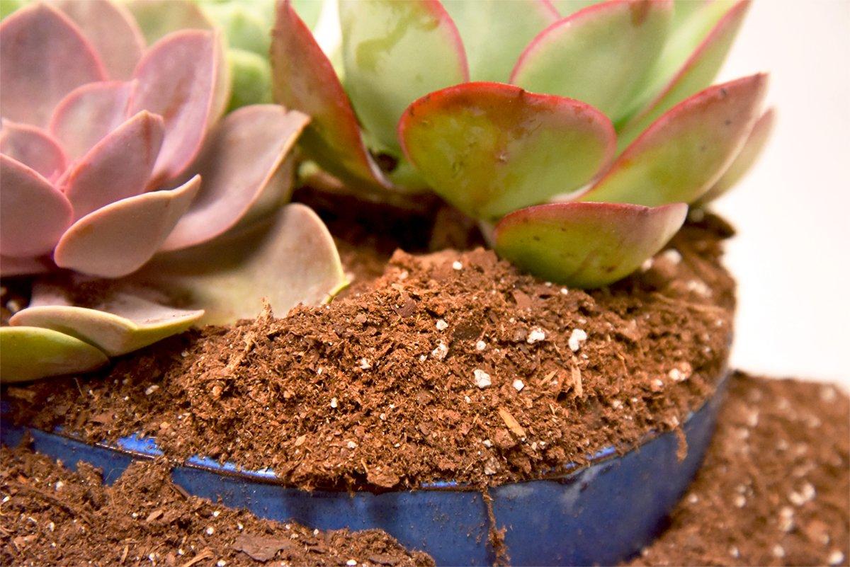 Brown//A Hoffman 10404 Organic Cactus and Succulent Soil Mix 4 Quarts