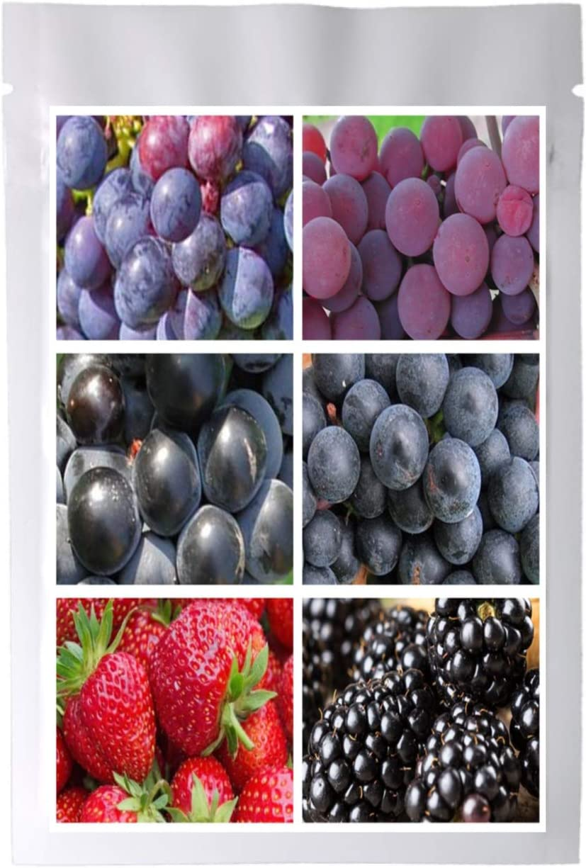 Bulk 4 Grape Vine Seeds Survival Seeds 340 Seeds + 3 Plant Markers Bonus Strawberry BlackBerry