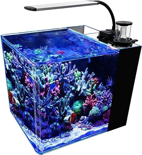 GankPike Tanque de arrecifes de Agua Salada de 8 galones con ...
