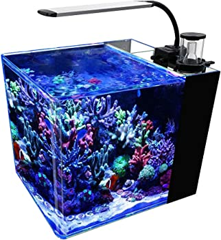 Gankpike 8-Gallon Nano Reef Tank