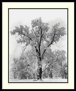 Framed Wall Art Print Oak Tree, Snowstorm, Yosemite National Park-1948 by Ansel Adams 27.00 x 32.00