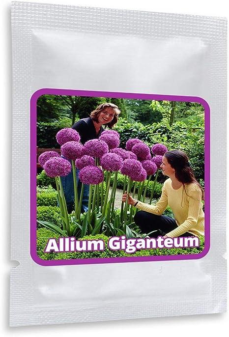 Belle Fleur Ornement Plante Maison Jardin Violet Graines de Tournesol H1PS