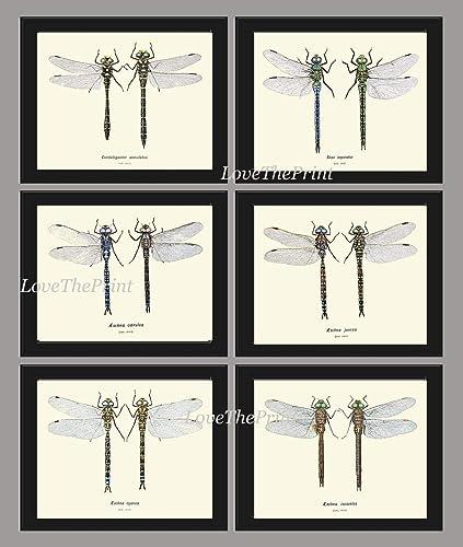 Amazon com: Antique Dragonfly Print Set of 6 Prints Antique Wall Art