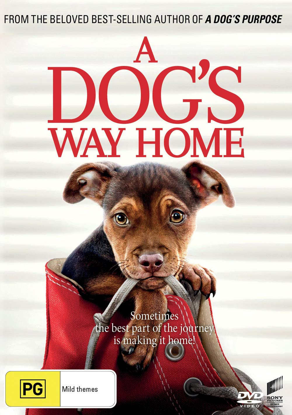 A Dog's Way Home | NON USA Format | Region 4 & 2 Import - Australia
