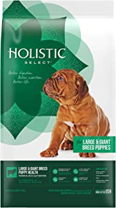 Holistic Select Natural Dry Dog Food Large & Giant Breed Puppy Lamb