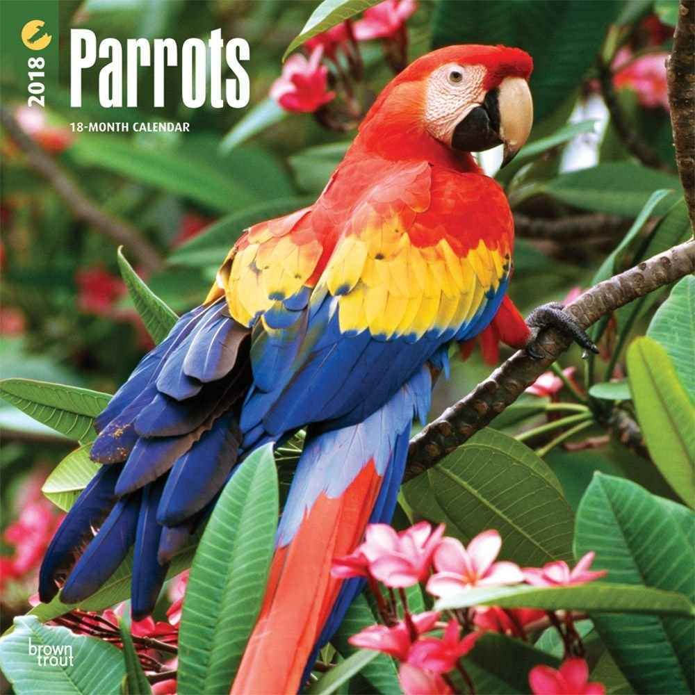 Parrots 2018 12 x 12 Inch Monthly Square Wall Calendar, Domestic Wildlife Animals Bird Tropical Rainforest (Multilingual Edition) by BrownTrout Publishers