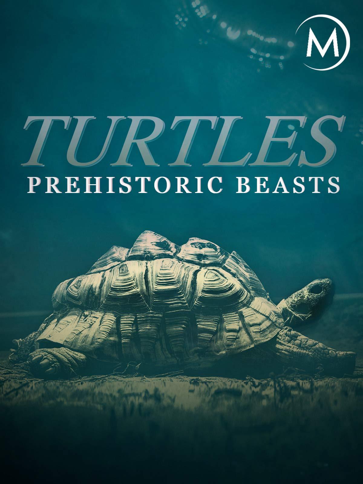 Turtles: Prehistoric Beasts on Amazon Prime Video UK