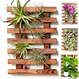 Wall Planter – Wooden Hanging Planter for Indoor Plants, Air Plant Succulent Holder Hanger, Vertical Garden, Wall Decor…