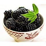 "Ohio Treasure Everbearing Black Raspberry - 2.5"" Pot - Extremely Hardy/Prolific"