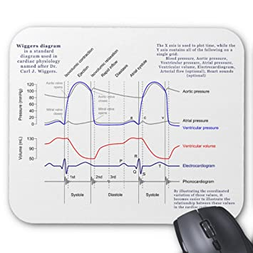 Amazon zazzle wiggers diagram mouse pad office products zazzle wiggers diagram mouse pad ccuart Image collections