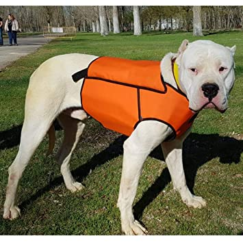 Chaleco con Collar de Perro Caza Jabali •Chaleco Fabricado en ...