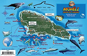 moheli comoros islands africa dive map reef creatures laminated fish id card