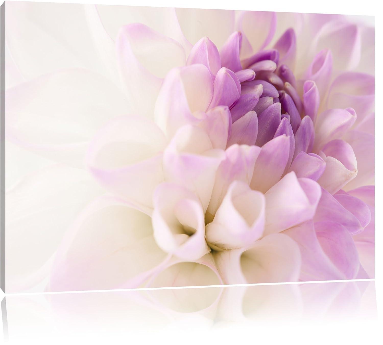 Traumhafte lila weiße weiße weiße Blüte Format  120x80 cm auf Leinwand, XXL riesige Bilder fertig gerahmt mit Keilrahmen, Kunstdruck auf Wandbild mit Rahmen, günstiger als Gemälde oder Ölbild, kein Poster oder Plakat 674854