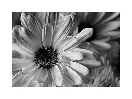 Amazon photo black white flower petals framed print f12x2823 photo black white flower petals framed print f12x2823 mightylinksfo