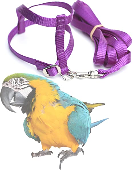 amazon com fred bird harness with 6 foot leash for blue and gold