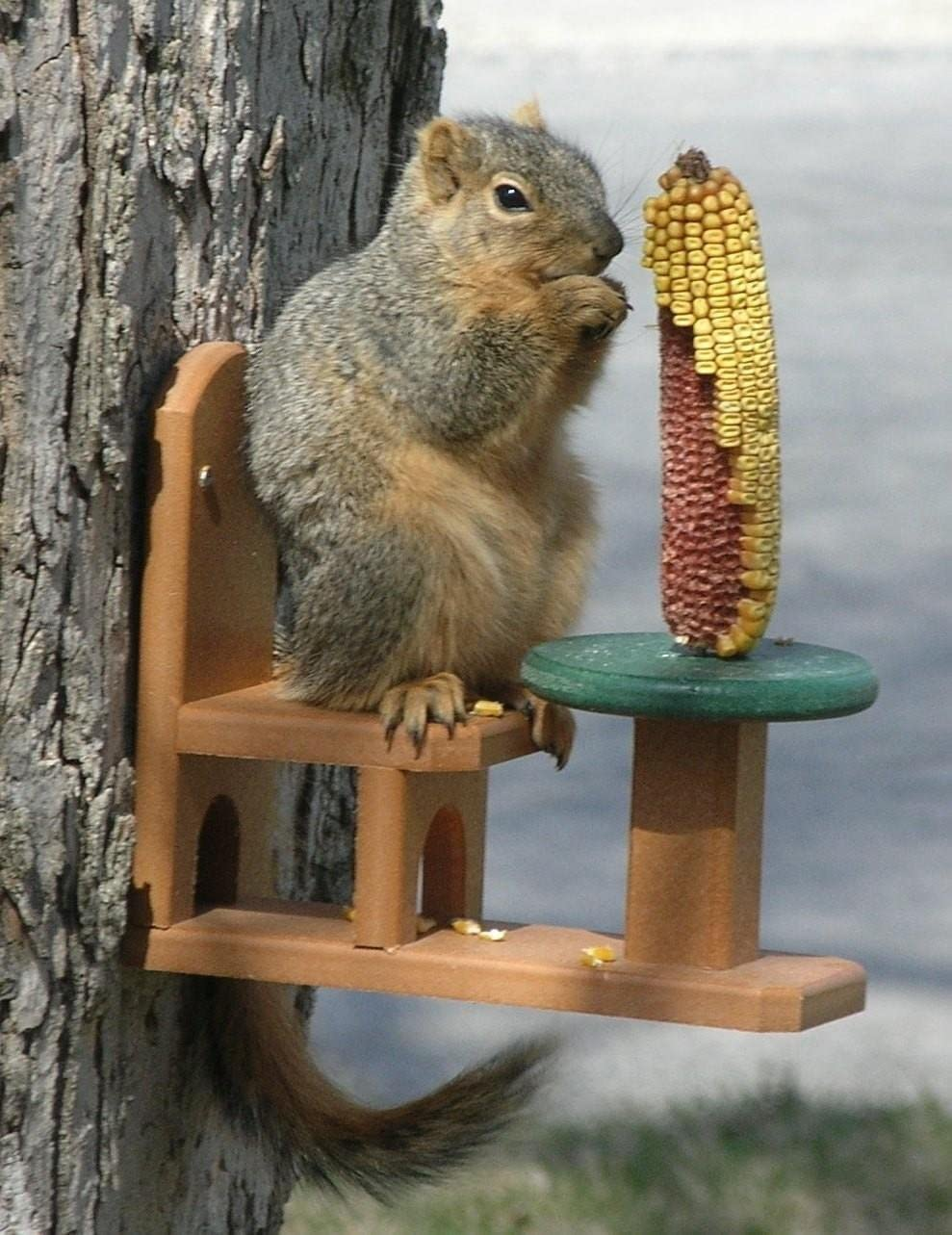 Recycled Poly Squirrel Feeder Table & Chair For Outside Patio and Garden View