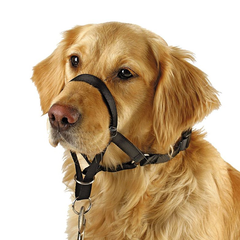 Barkless Dog Head Collar, No Pull Training Tool for Dogs on Walks, Includes Free Training Guide, 5 (XL)