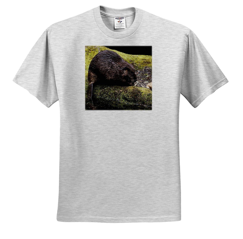 3dRose Danita Delimont Beavers ts/_313995 Adult T-Shirt XL Beaver with Cut Log
