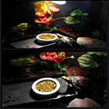 Tfwadmx 2 Pack Reptile Food Bowl, Mini Ceramic
