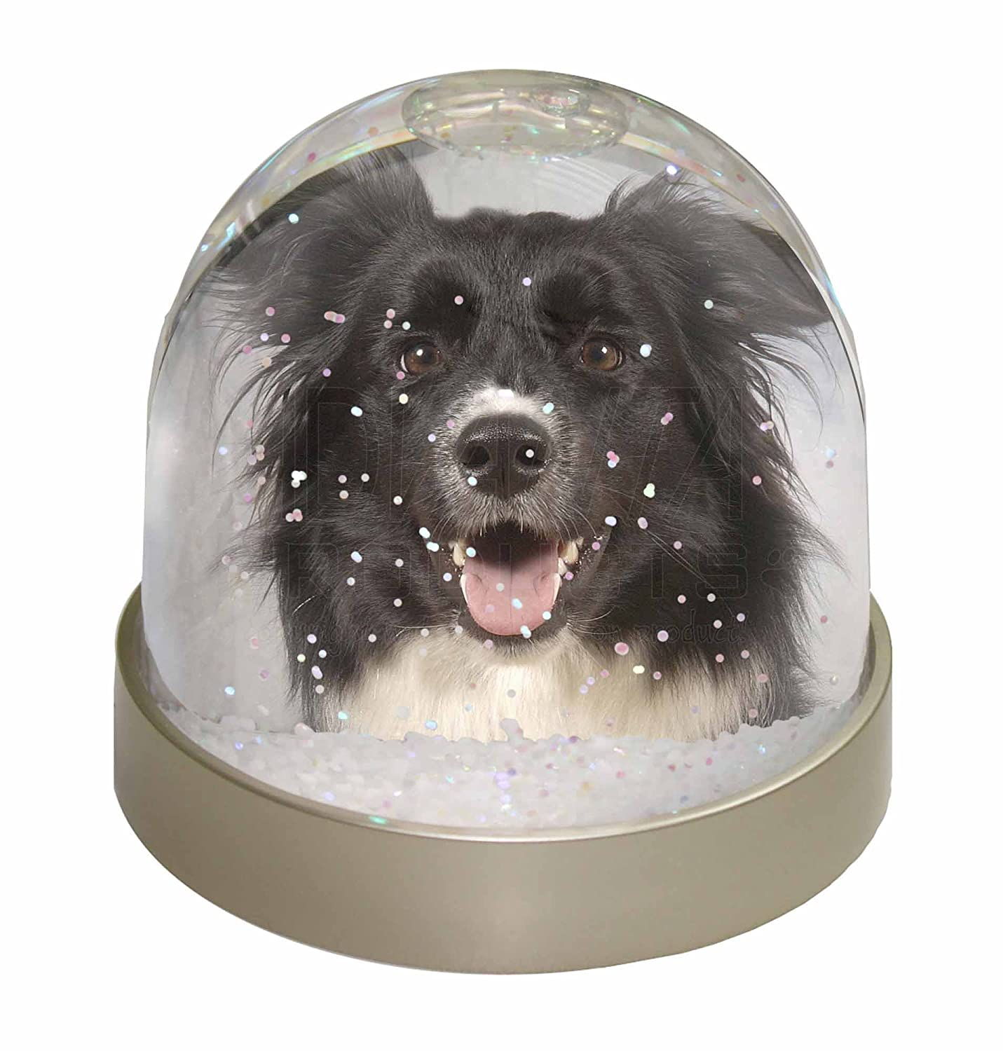 Advanta Border Collie Dog Snow Dome Globe Waterball Gift, Multi-Colour, 9.2 x 9.2 x 8 cm Advanta Products AD-BC30GL