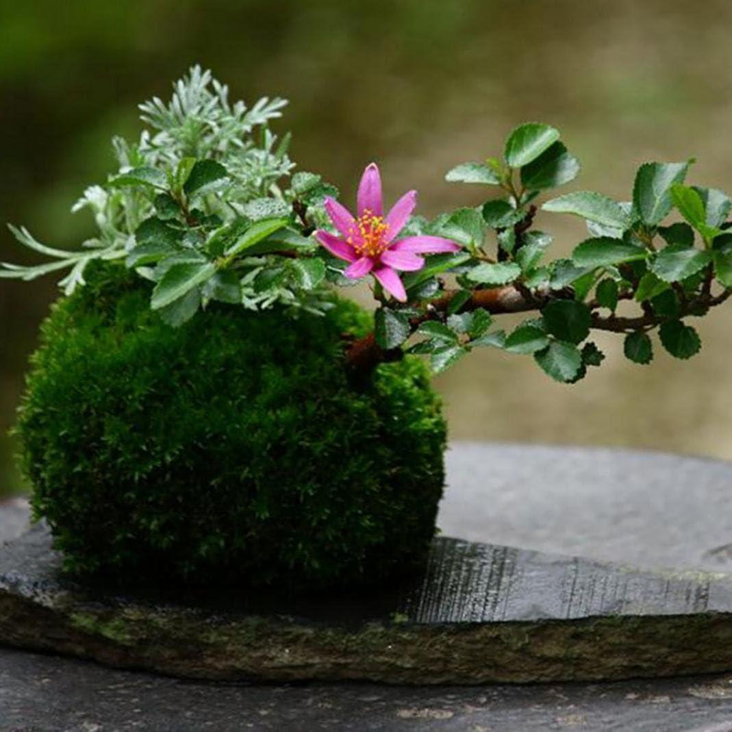 good01/Moss Boule Moss Pot de Fleurs Pot de Fleurs Naturel Tissage Moss Boule bonsa/ï Kokedama D/écor de Jardin Fleur Support pour Pot de Fleurs