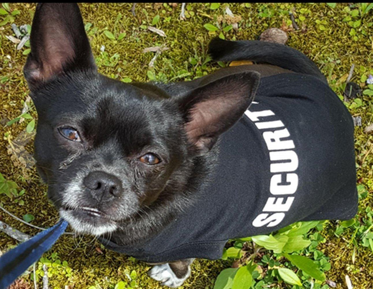 SECURITY Dog Shirt