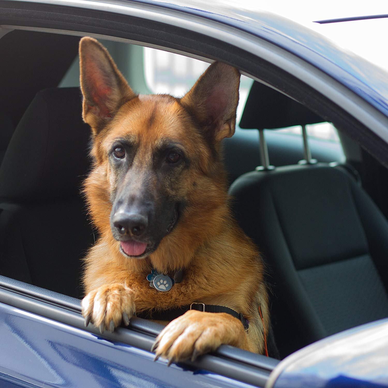 Cintur/ón de seguridad para perro M/áxima seguridad para usted y su perro Perfecto para todas las razas de perro Voyage Premium