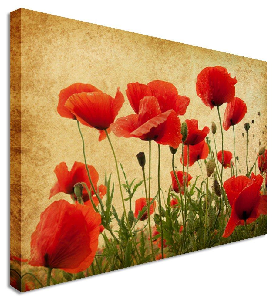Poppy Pictures: Amazon.co.uk