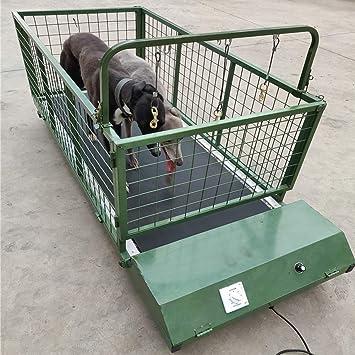 QNMM Fitness Pet Treadmill Indoor Pet, Alfombra para Perro, Animal ...