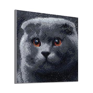 6SlonHy - Cuadro de Punto de Cruz, diseño de Gato, 25 x 25 cm, Color Gris, F005: Amazon.es: Hogar