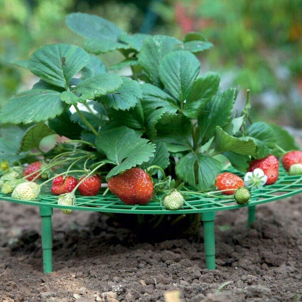 Inicio Soporte de Cultivo de Fresas Estante de Soporte de Plantas ...