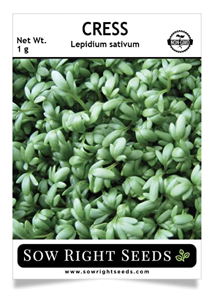 Sow Right Seeds - Cress Seed for Planting - All Non-GMO Heirloom Cress  Seeds with Full Instructions for Easy Planting and Growing Your Kitchen  Herb ...