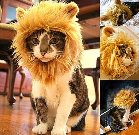 Yunt Peluca de león para mascotas, con orejas, convierte a tu mascota en un feroz león.: Amazon.es: Productos para mascotas