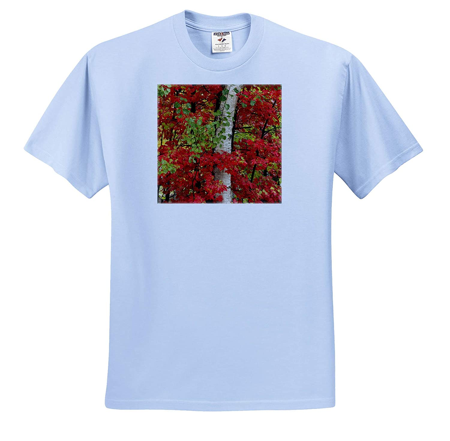 Autumn 3dRose Danita Delimont - Adult T-Shirt XL Red Maple Leaves in Autumn and White Birch Tree Trunk ts/_314855