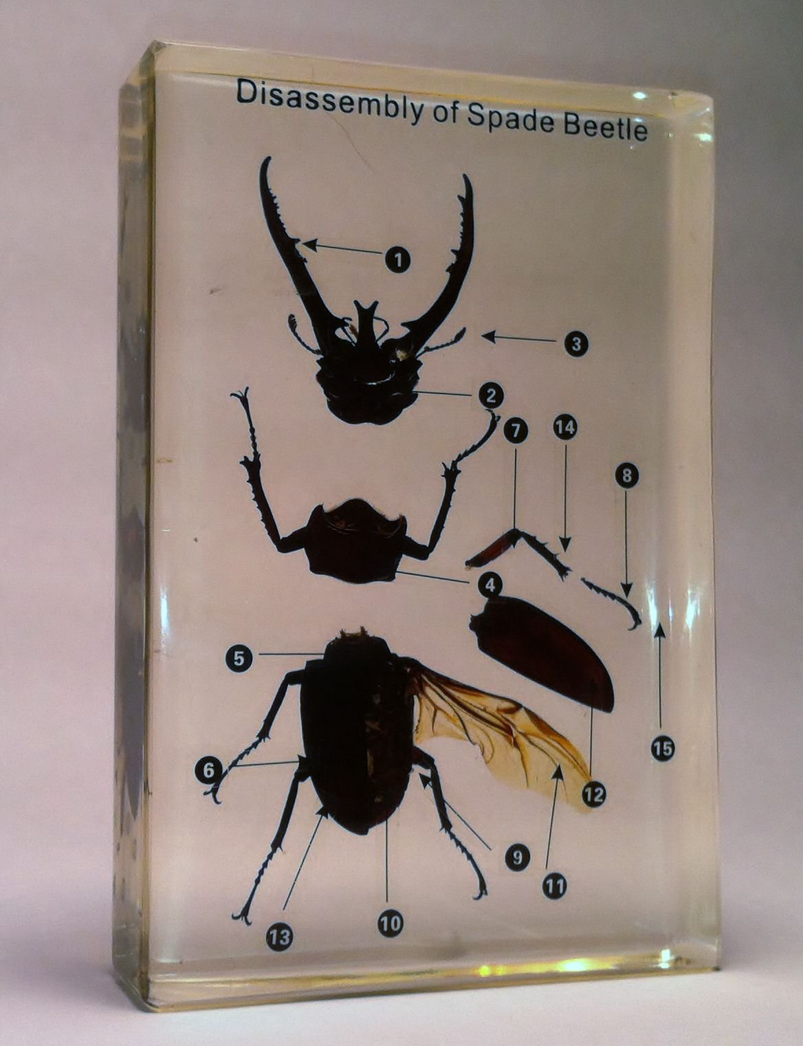 Disassembly of a Beetle in Acrylic