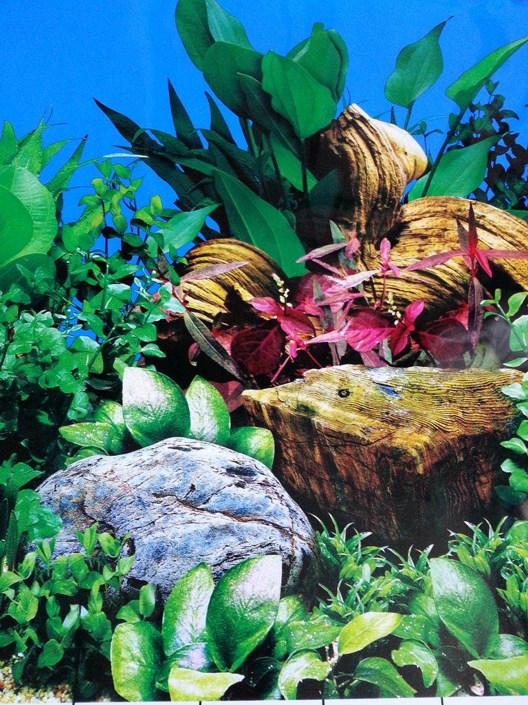 Karen Low 19.5 Height Double Sided Aquarium Background Underwater Plants and Desert Fish Tank Wallpaper Decorations