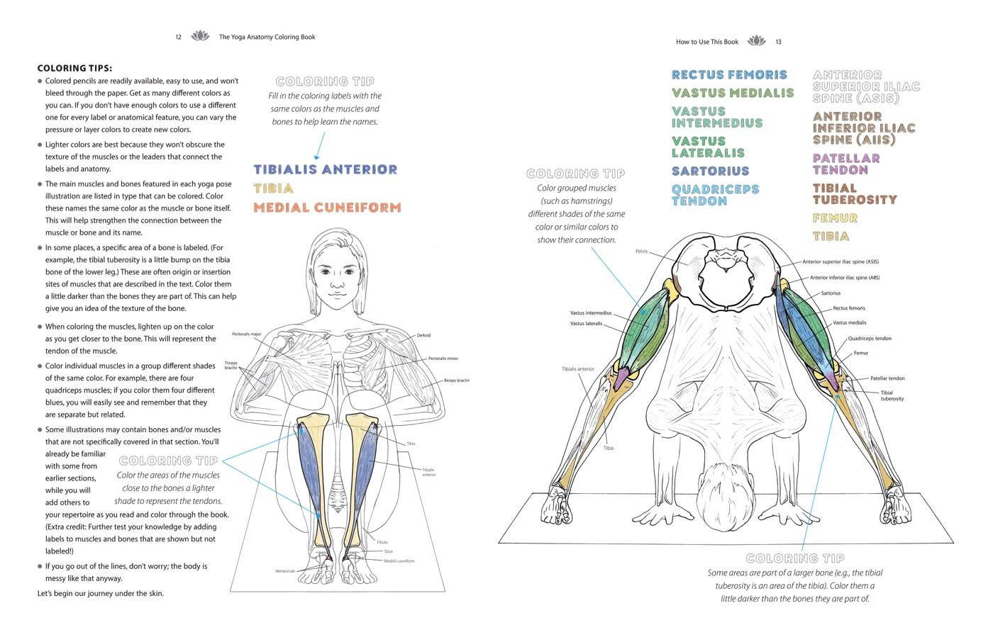 The Yoga Anatomy Coloring Book A Visual Guide To Form Function Rh Amazon Com Femur On Skeleton Diagram Bone