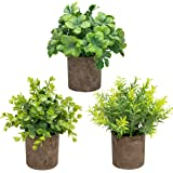 THE BLOOM TIMES Set of 3 Small Potted Artificial Plants Plastic Fake Greenery Boxwood Rosemary Mini Faux Plants in Pots…