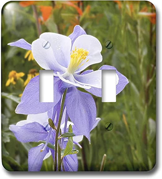 3drose Lsp 36356 2 Blue Columbine Colorado State Flower Double Toggle Switch Switch Plates Amazon Com