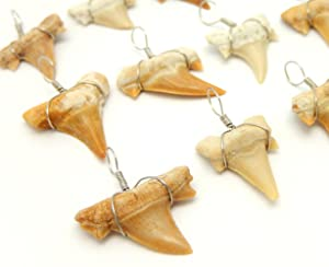 25 Wire Wrapped Fossilized Shark Teeth for Necklace - 25 Shark Tooth Charm Pendant