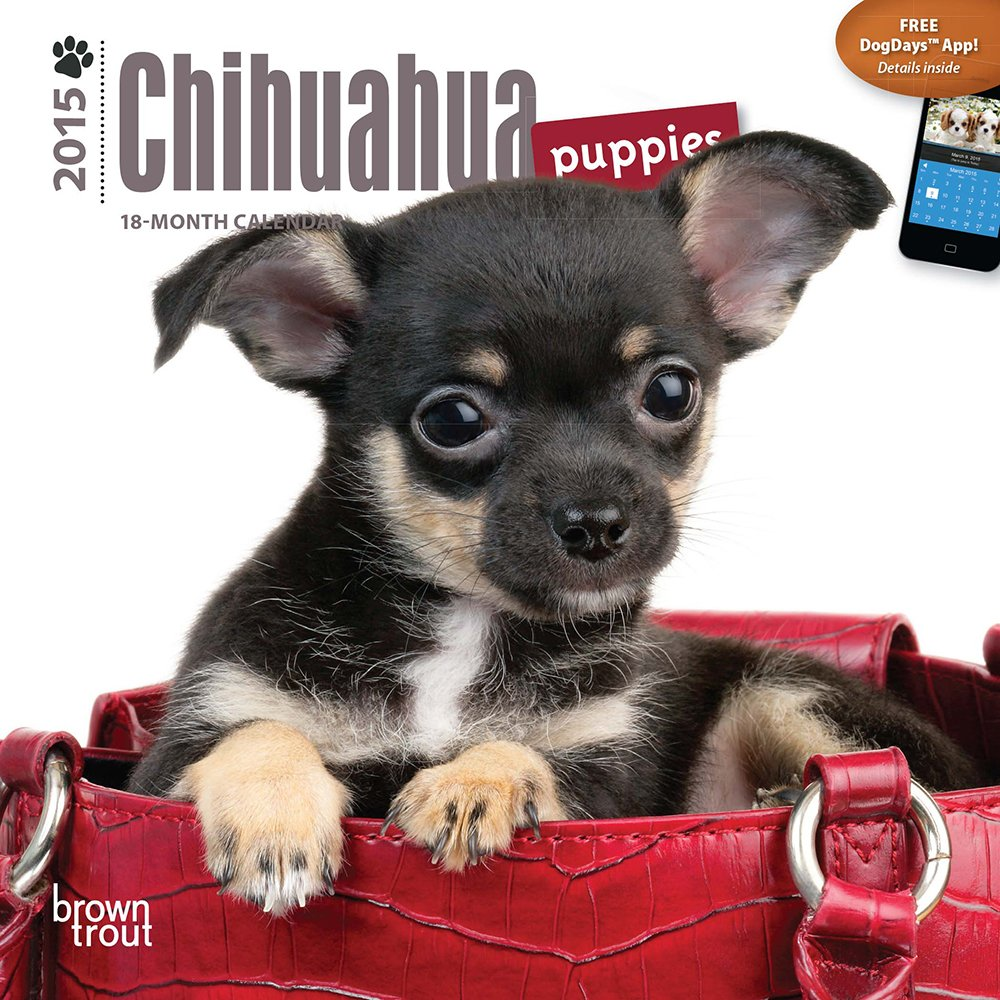 Chihuahua Puppies 2015 Mini 7x7 9781465023742 Amazoncom Books